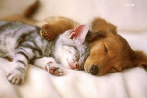 犬と猫のトータルライフケア