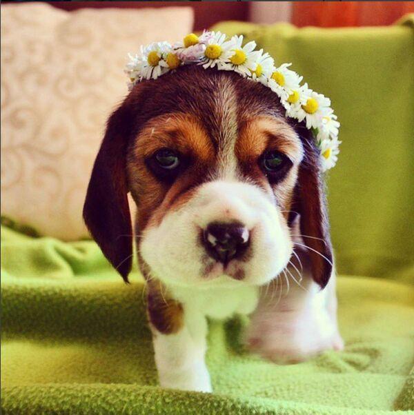 cute-flower-funny-lovely-Favim.com-3809426